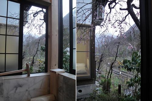 風呂から梅.jpg